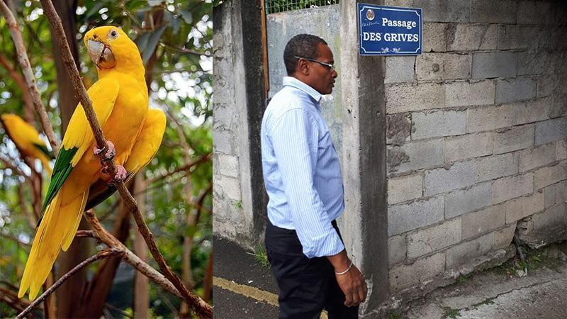 """Scandale YELLOW PARROT (ou SODEM) : quand le maire de Fort-de-France pointe du doigt la CTM dans l'affaire des """"oubliés de la Pointe La Vierge"""""""