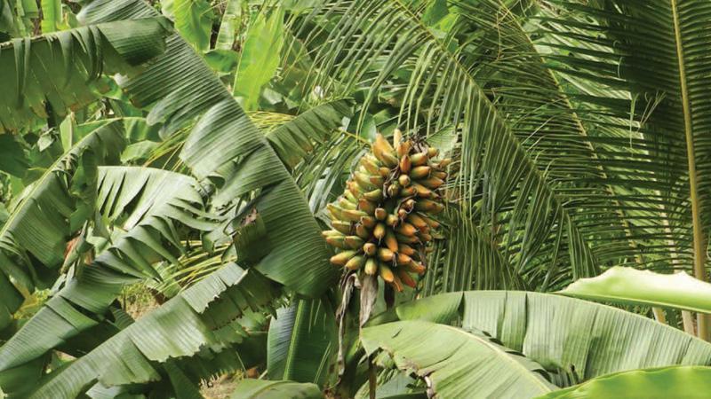 Chlordécone, le poison des Antilles