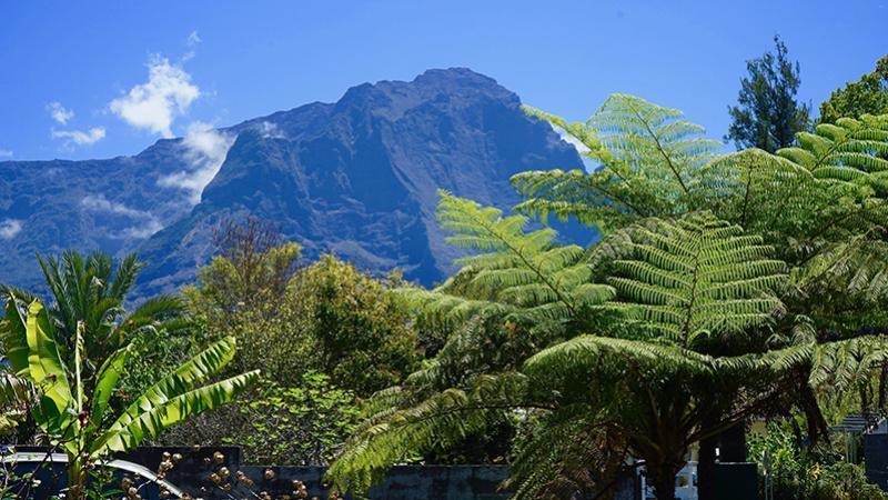 À la Réunion, le Papangue pourrait disparaître !