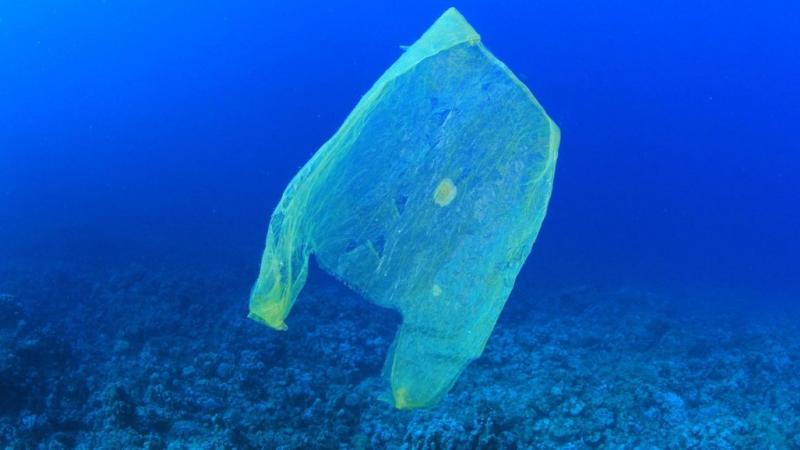 Véritable hécatombe : 80 % des poissons d'Amazonie ont du plastique dans l'estomac