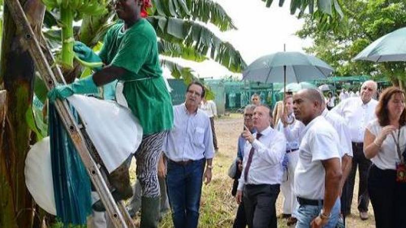 La Chambre d'agriculture de la Martinique ou la Belle au bois dormant du chlordécone