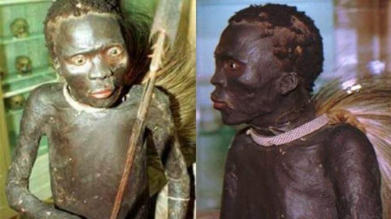 Le corps humain empaillé d'un guerrier Africain exposé au musée en europe tel un « animal sauvage »