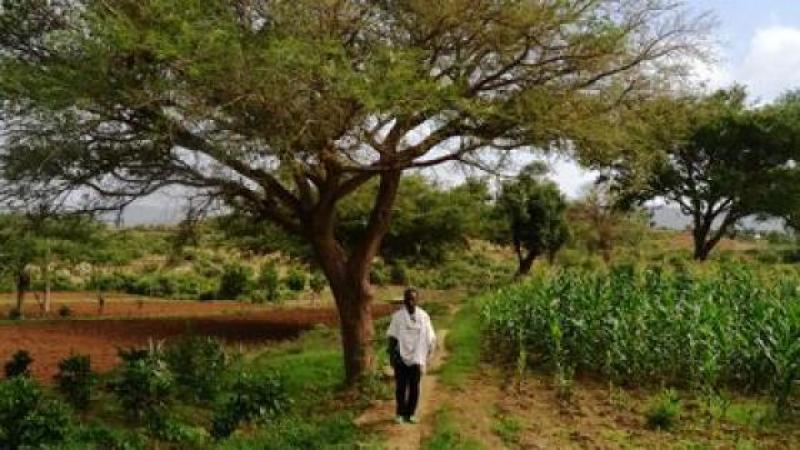 LE VILLAGE ETHIOPIEN QUI NE CRAINT PLUS NI LA SECHERESSE NI L'EXODE