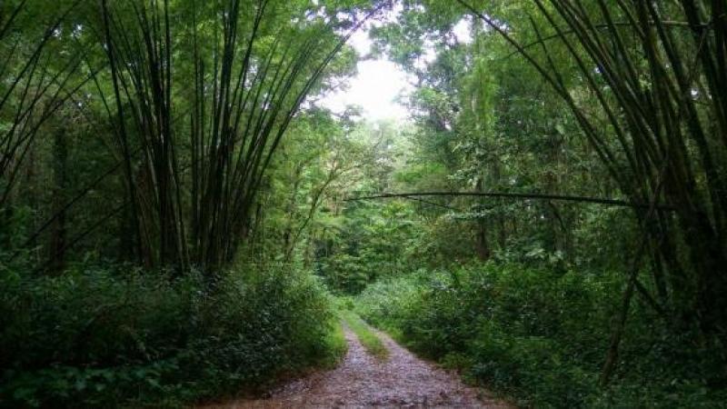 L'écologiste ou le capitaliste : un choix cornélien ?