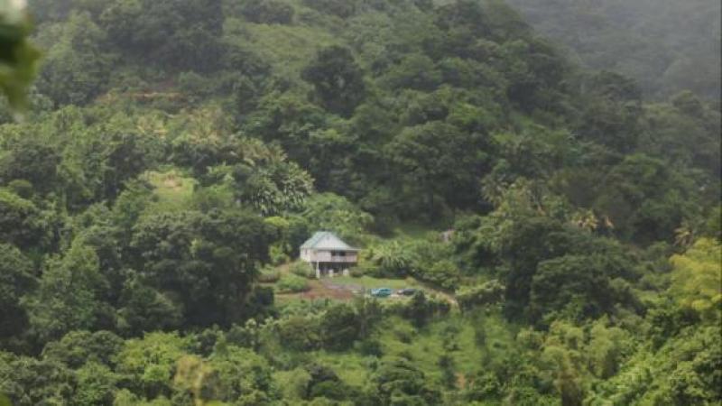 L'élu politique en pays sous-développé ne sait pas que 70% du territoire japonais est couvert de forêts