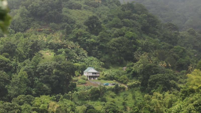 DE LA SELVA AL JARDÍN. El paisaje caribeño en las novelas «María la noche» (Rossi, 1985) y «My Brother» (Kincaid, 1998)