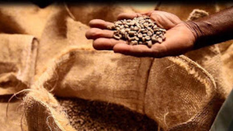 Comment le café a payé la dette de l'indépendance d'Haïti.