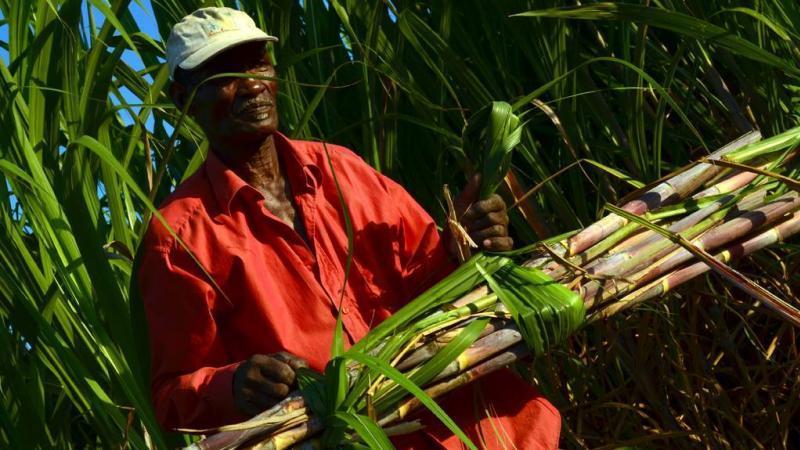 Pour une mobilisation populaire en faveur des moyens et petits planteurs de canne