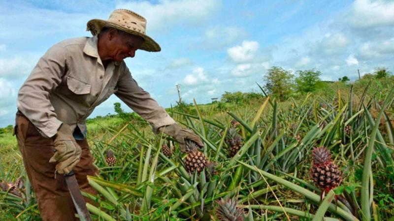 """Lanzan en Cuba campaña """"Sin Campo no hay País"""" para evitar catástrofe alimentaria"""