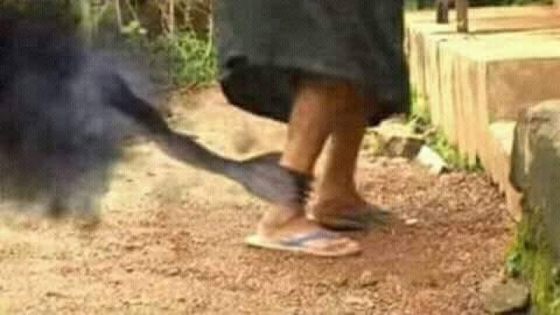LE CARLOS GOSHN MARTINIQUAIS (DU CEREGMIA) S'ENFUIT AU GHANA