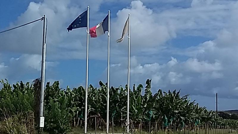 Les drapeaux de la bananeraie