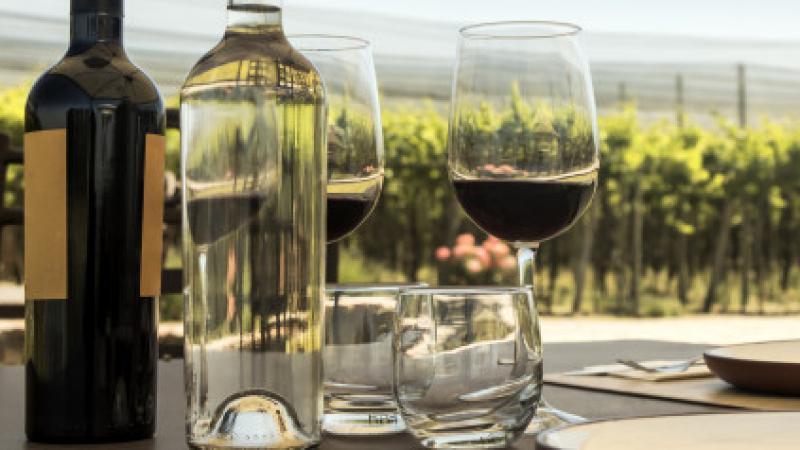 La route du vin: Le nouvel itinéraire touristique qui traverse la Tunisie