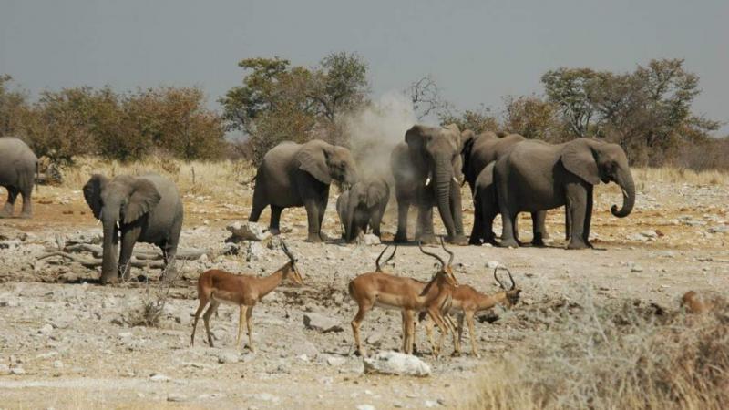 La Namibie vend 170 éléphants pour protéger sa faune sauvage