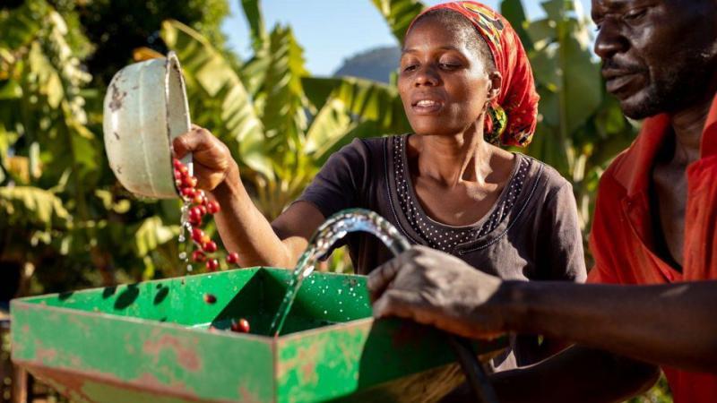 Nespresso Seeks To Put Zimbabwean Coffee Back On The Table