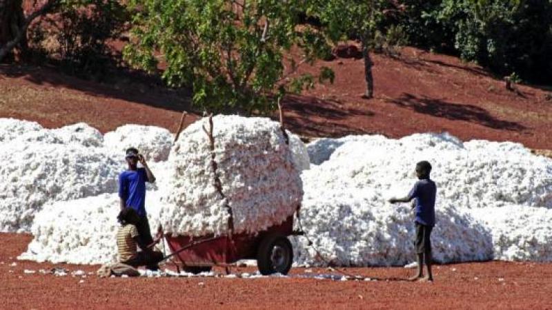 Le Burkina dit stop au coton OGM de Monsanto... et fait une super récolte
