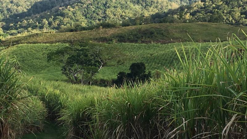 Martinique : Tristes Tropiques...