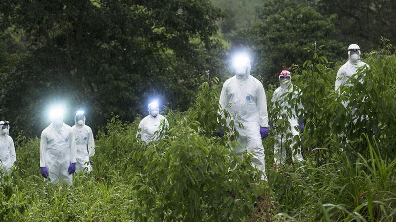 « Les virus sont une des forces majeures qui façonnent la biosphère »
