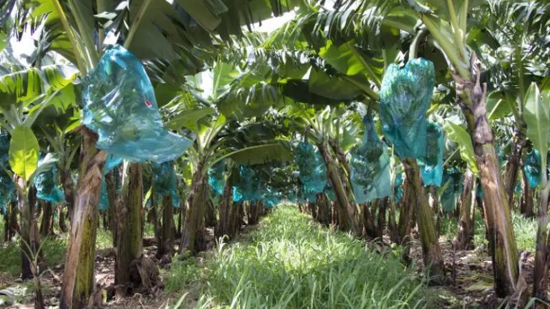 En ce qui concerne l'écologie et l'état sanitaire de la Martinique…