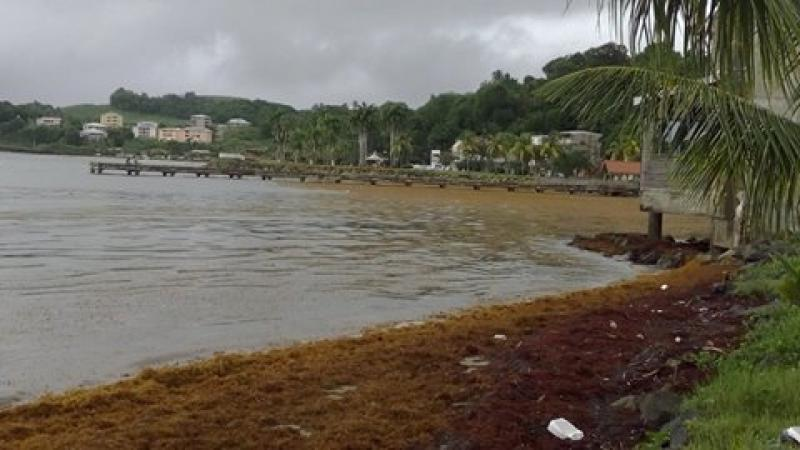 """Députés et sénateurs de la Martinique : spécialistes du """"vèglaj"""""""