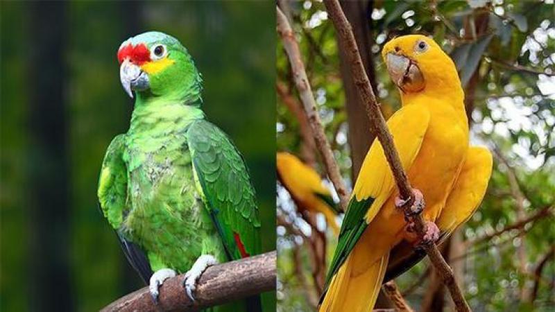 Depuis avant-hier, Green Parrot rit jaune