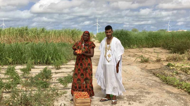 En Mauritanie, un maraîcher transforme le désert en jardin