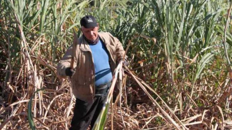 La situation des planteurs de canne à sucre à La Réunion ne cesse de se dégrader