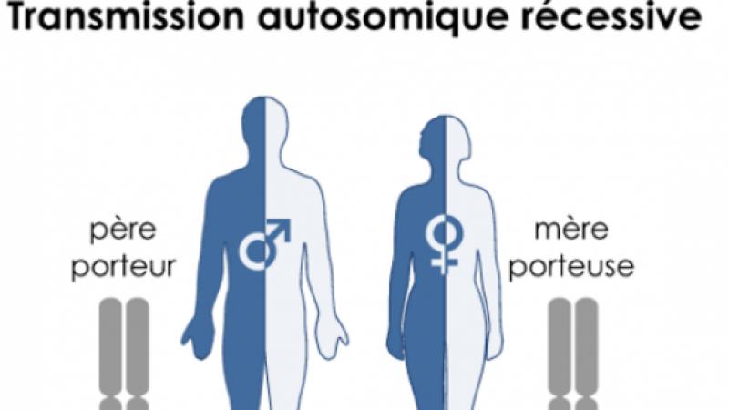 DREPANOCYTOSE, LA MALADIE GENETIQUE QUI EXCITE L'EXTREME DROITE