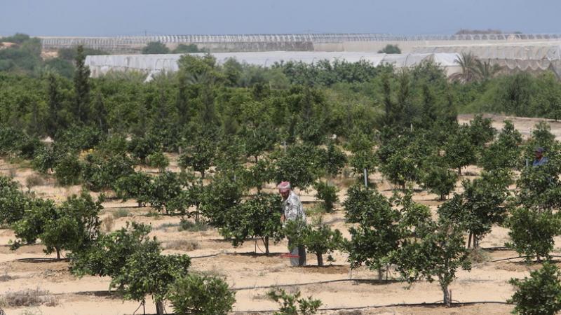 L'armée israélienne pulvérise des pesticides sur la zone tampon avec Gaza : l'agriculture en péril