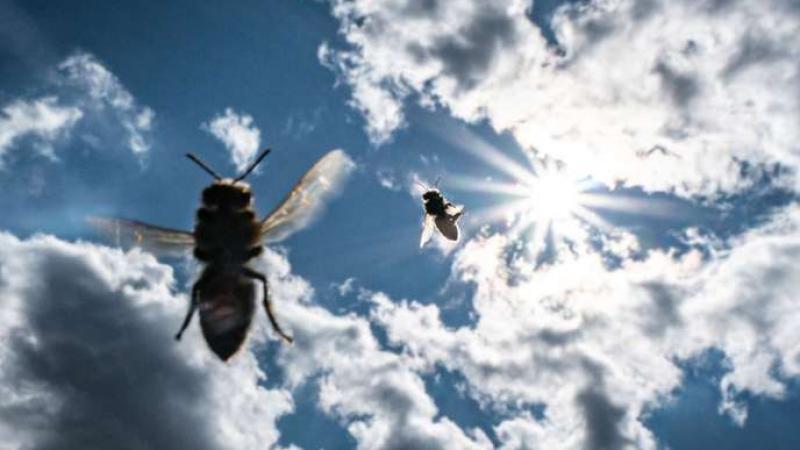 Disparition des abeilles : comment l'Europe a renoncé à enrayer leur déclin