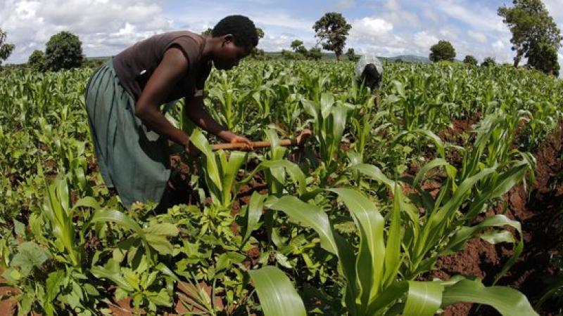 """""""Si les multinationales payaient leurs impôts, l'Afrique n'aurait besoin d'aucune aide"""""""