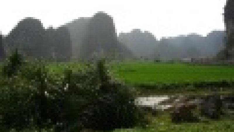 VIETNAM : SOLIDARITE AVEC LES VICTIME DE L'AGENT ORANGE (DIOXINE)