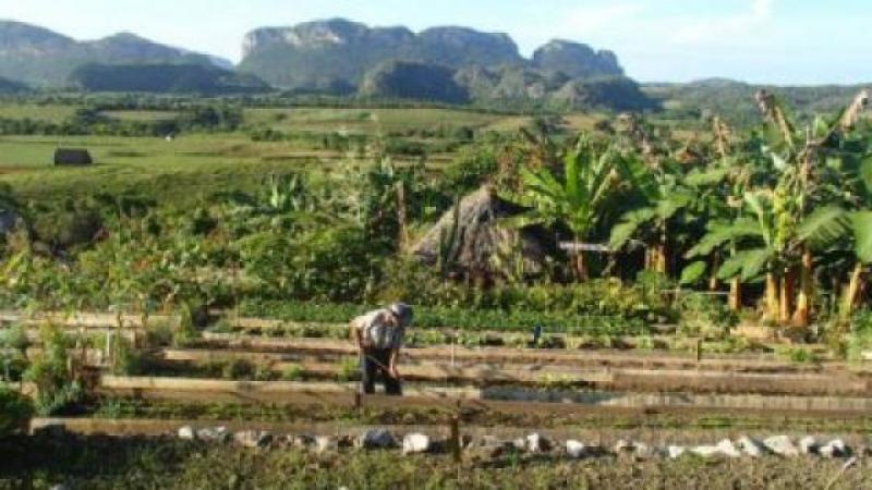 CUBA, LE PAYS OU L'AGROECOLOGIE EST VRAIMENT APPLIQUEE