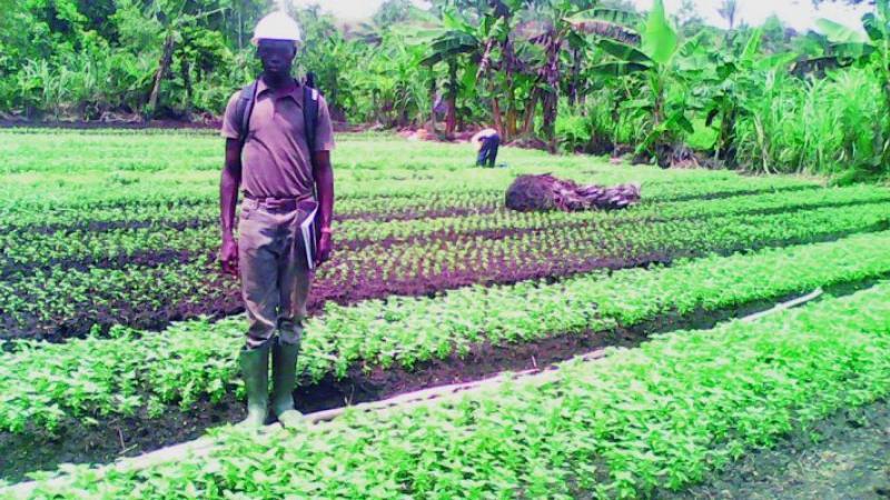 Cameroun : J'ai lancé ma plantation de condiments avec 4000 Fcfa