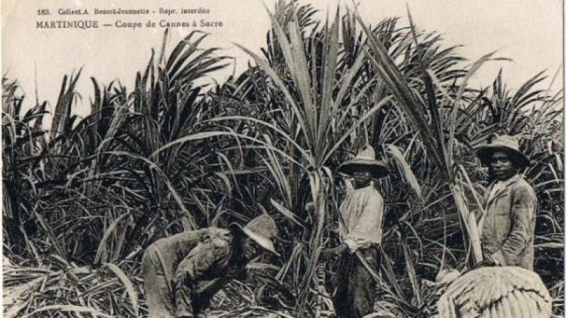 LA MARTINIQUE AGRICOLE DE 1936