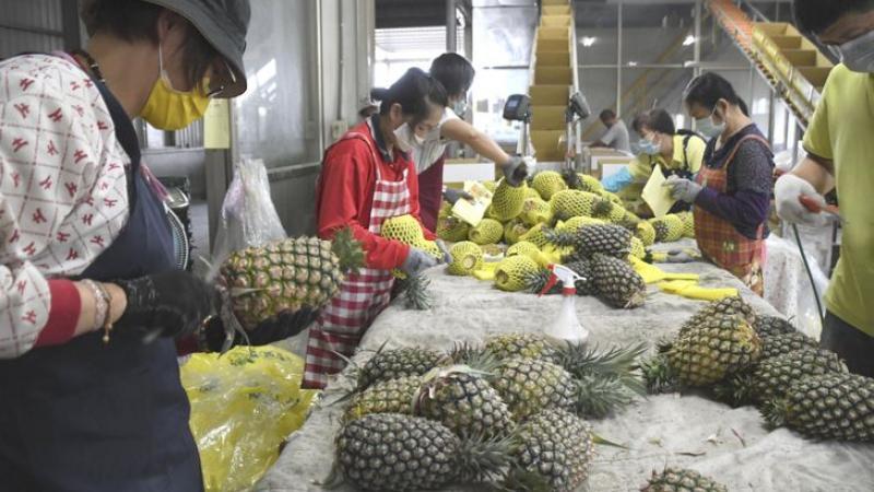 Taïwan a gagné «la bataille de l'ananas» contre la Chine