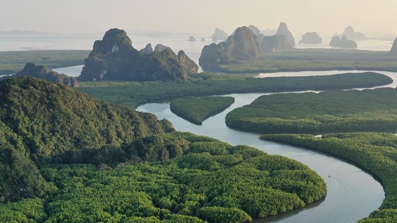 """Le Brésil veut urbaniser la forêt amazonienne, jugée """"non productive"""""""