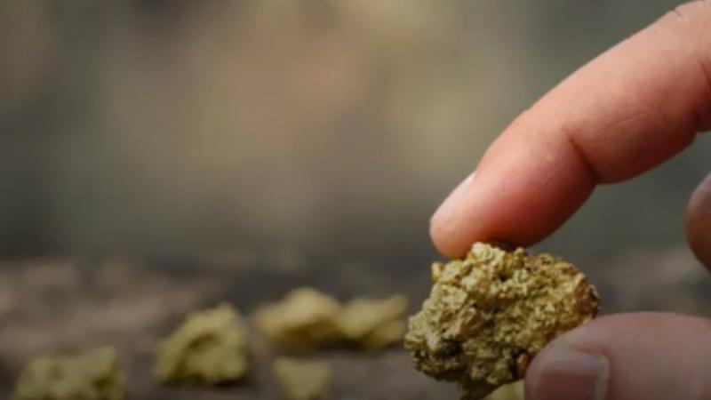 Le retour de la ruée vers l'or en Australie avec deux énormes pépites découvertes