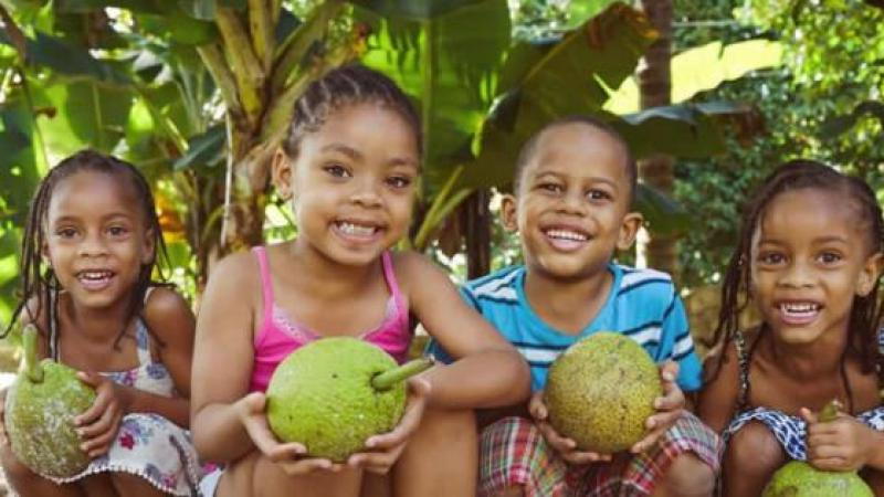 BREADFRUIT IS HIGH IN PROTEIN AND COULD FEED THE WORLD