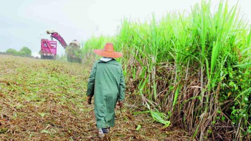 La Réunion polluée au glyphosate