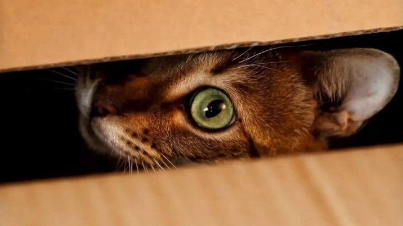 Des physiciens trouvent un moyen d'observer le chat de Schrödinger sans risquer de le tuer
